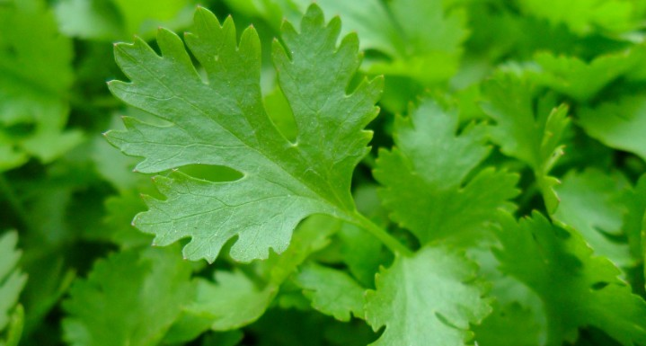 parsley in hindi