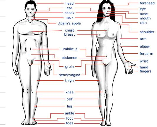 Human Body Parts name with Picture in English girls Male female All